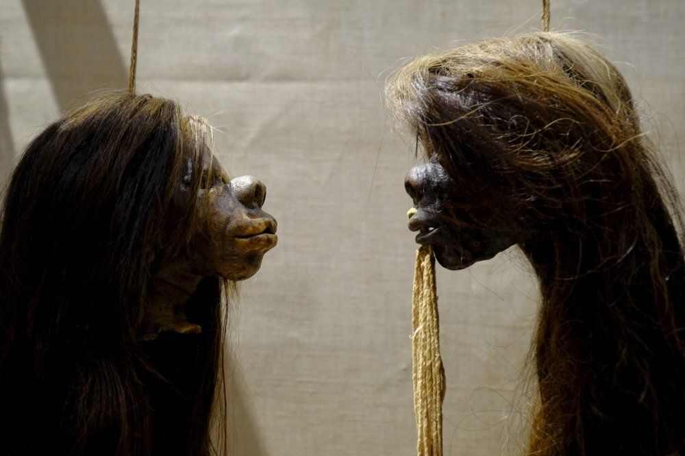 Oxford University's Pitt Rivers Museum has removed its famous collection of shrunken heads and other human remains from displ